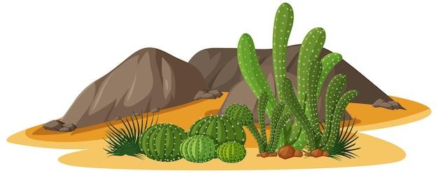 Diferentes formas de cactos em um grupo com elementos de rochas Vetor grátis
