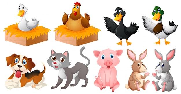 Diferentes tipos de animais de fazenda Vetor grátis