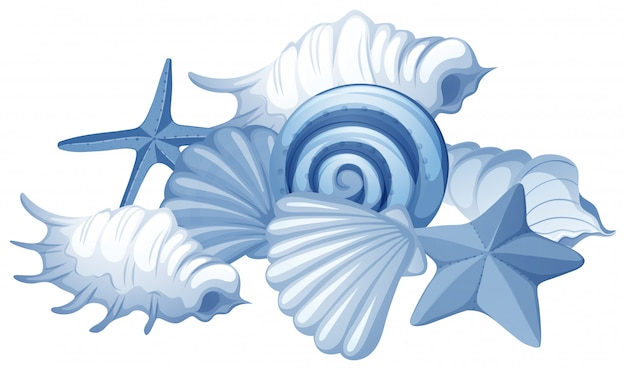 Diferentes tipos de conchas do mar em branco Vetor grátis