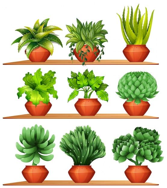 Diferentes Tipos De Plantas Em Ilustra O De Panelas De