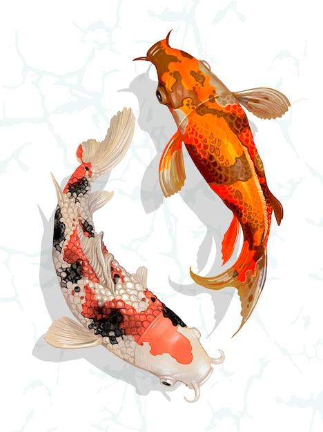 Dois, koi japonês, peixe, natação Vetor grátis