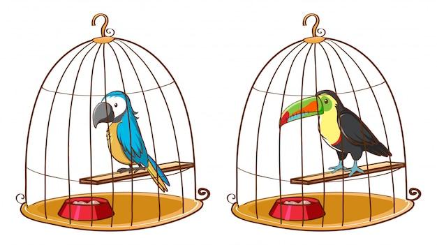 Dois pássaros em gaiolas de pássaros Vetor grátis