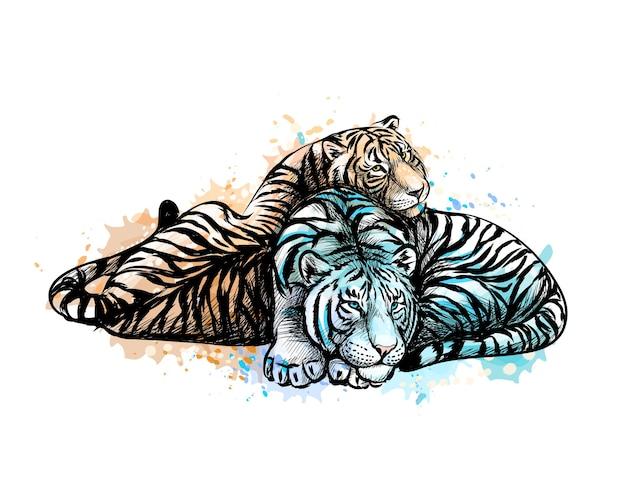 Dois tigres amarelos e brancos com um toque de aquarela, esboço desenhado à mão. ilustração de tintas Vetor Premium