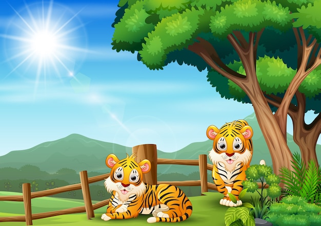 Dois tigres felizes brincando no zoológico aberto Vetor Premium