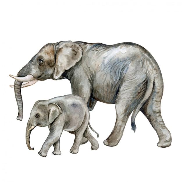 Elefante africano com um bebê. família. aguarela Vetor Premium