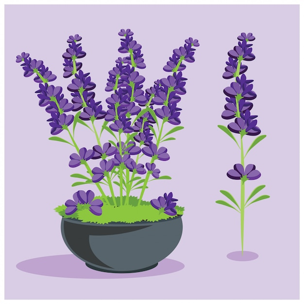 Elementos de flores de lavanda Vetor Premium