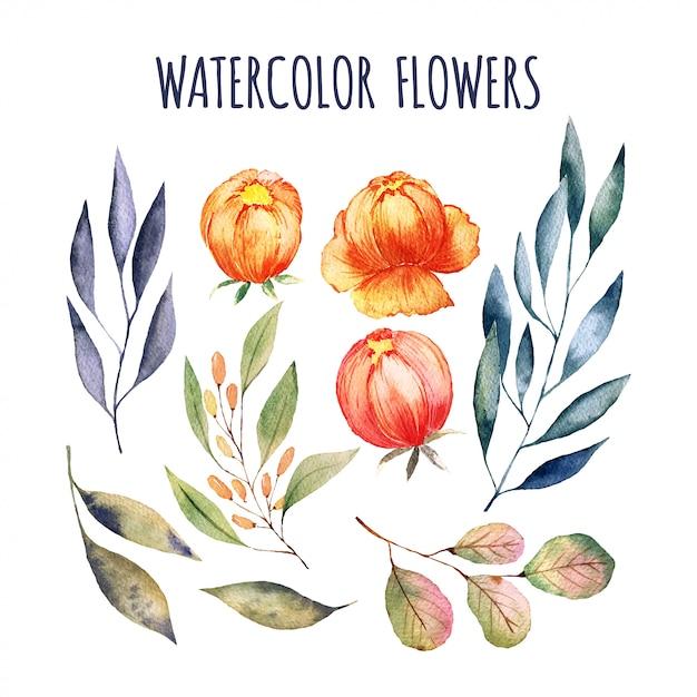 Elementos de flores em aquarela Vetor Premium