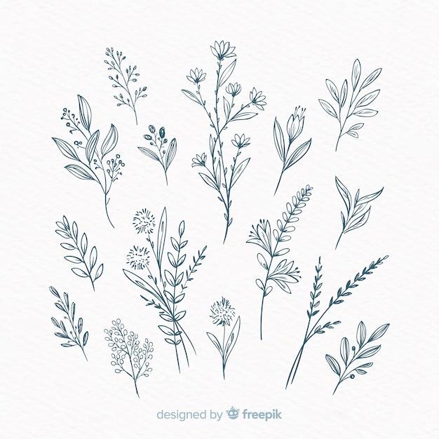 Elementos decorativos florais desenhados a mão Vetor grátis