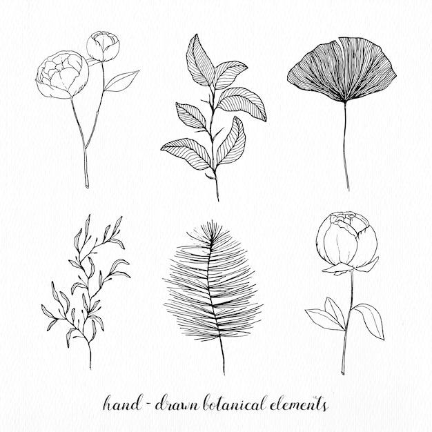 Elementos elegante botânicos desenhados mão Vetor grátis