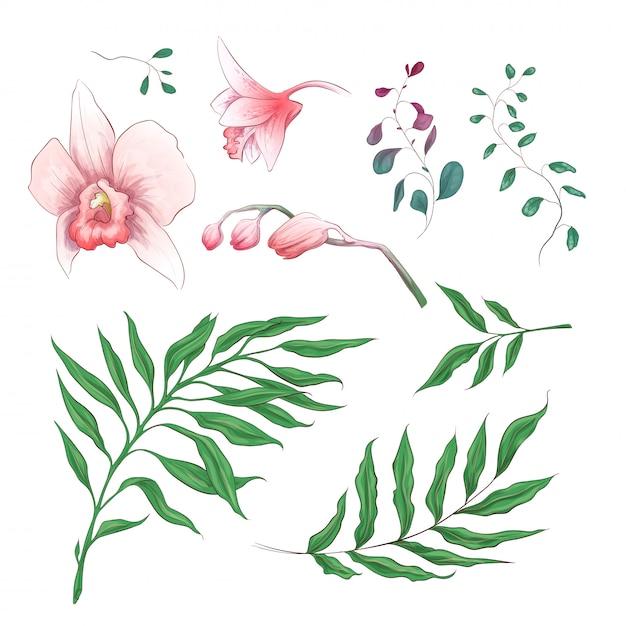 Elementos florais de flores tropicais de orquídea Vetor Premium