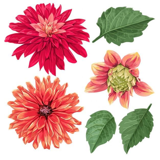 Elementos florais tropicais de flores de ásteres vermelhos Vetor Premium