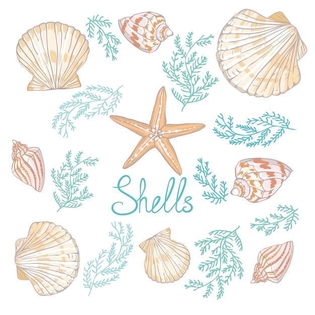 Entregue ilustrações tiradas do vetor - coleção das conchas do mar. Vetor Premium