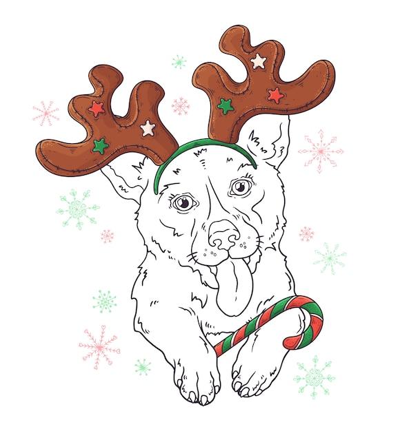 Entregue o retrato desenhado do cão do corgi no vetor dos acessórios do natal. Vetor Premium