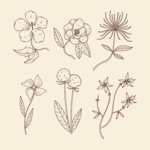 Ervas botânicas e flores silvestres em estilo vintage Vetor grátis