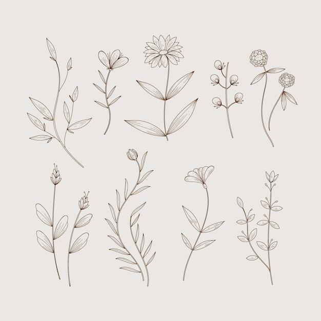Ervas botânicas minimalistas e flores silvestres em estilo vintage Vetor grátis