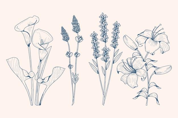 Ervas desenhadas à mão realista e flores silvestres Vetor grátis