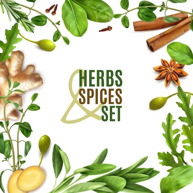 Ervas especiarias realista moldura quadrada com alecrim fresco tomilho espinafre folhas de canela anis de gengibre Vetor grátis
