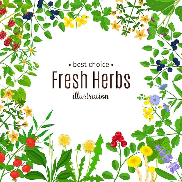 Ervas medicinais ou quadro de erva botânica Vetor Premium