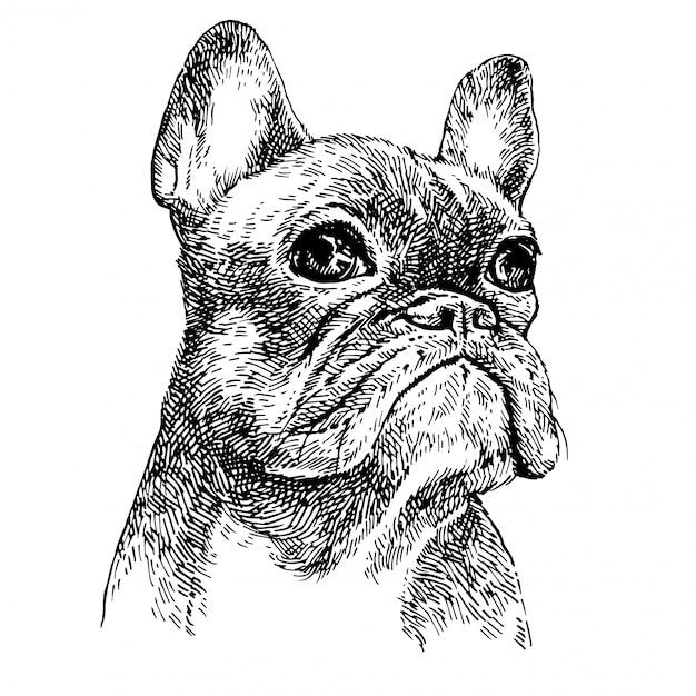 Esboce o retrato de um filhote de bulldog preto e branco bonito. cão desenhado à mão Vetor Premium