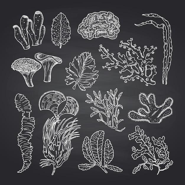 Esboço de algas. algas definidas no quadro preto Vetor Premium