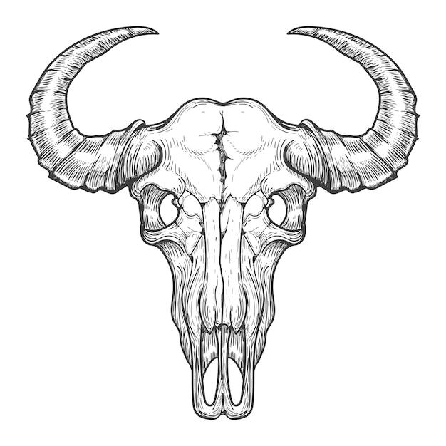 Esboço de caveira de búfalo Vetor Premium