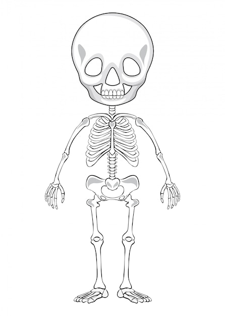 Esboço de desenho de um esqueleto humano Vetor grátis