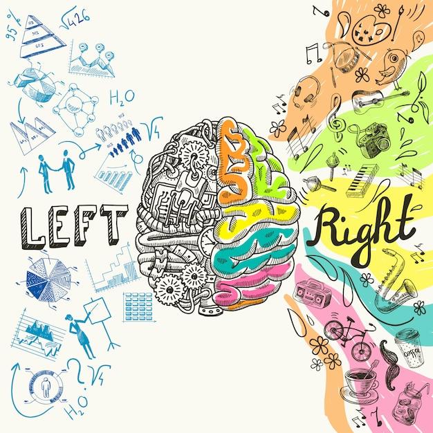 Esboço de hemisférios cerebrais Vetor Premium