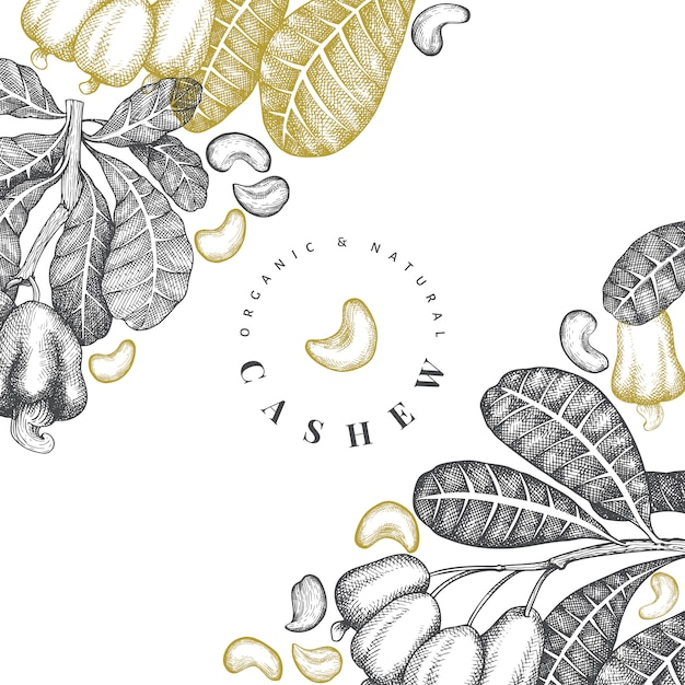 Esboço de mão desenhada design caju ilustração de porca vintage. Vetor Premium