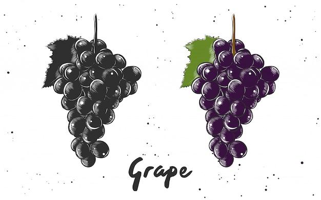 Esboço desenhado de mão da uva Vetor Premium