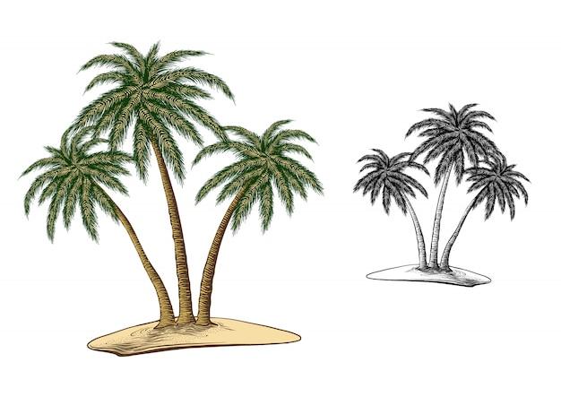 Esboço desenhado de mão das palmeiras na cor, isolado no branco Vetor Premium