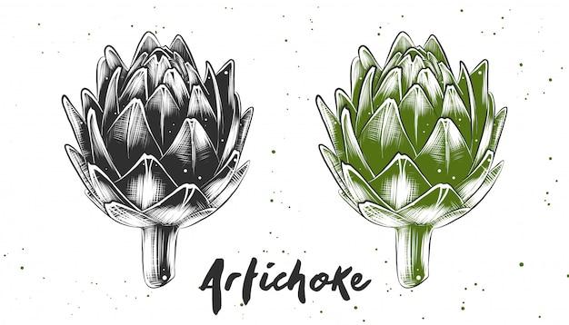 Esboço desenhado de mão de alcachofra Vetor Premium