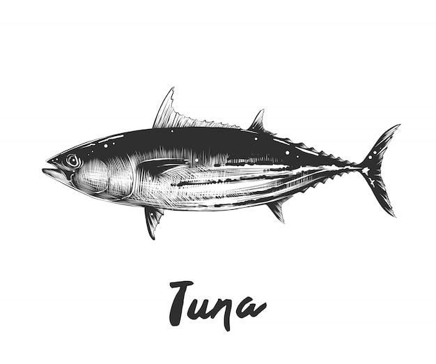 Esboço desenhado de mão de atum Vetor Premium