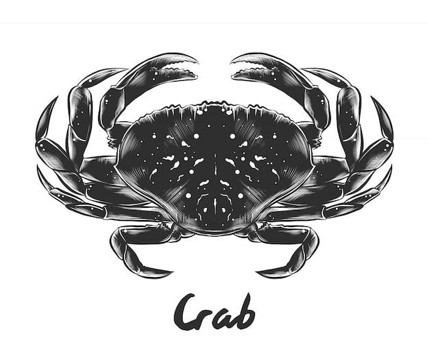 Esboço desenhado de mão de caranguejo em monocromático Vetor Premium