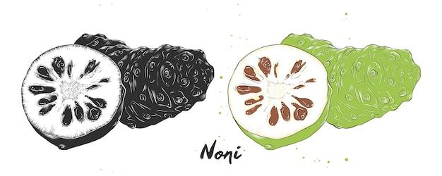 Esboço desenhado de mão de fruta noni Vetor Premium