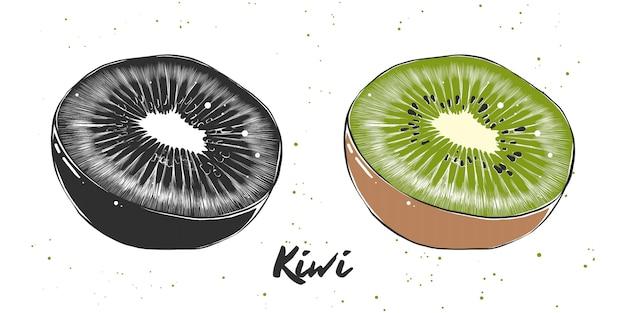 Esboço desenhado de mão de kiwi Vetor Premium