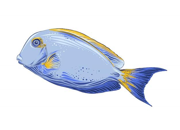 Esboço desenhado de mão de peixe na cor. isolado Vetor Premium
