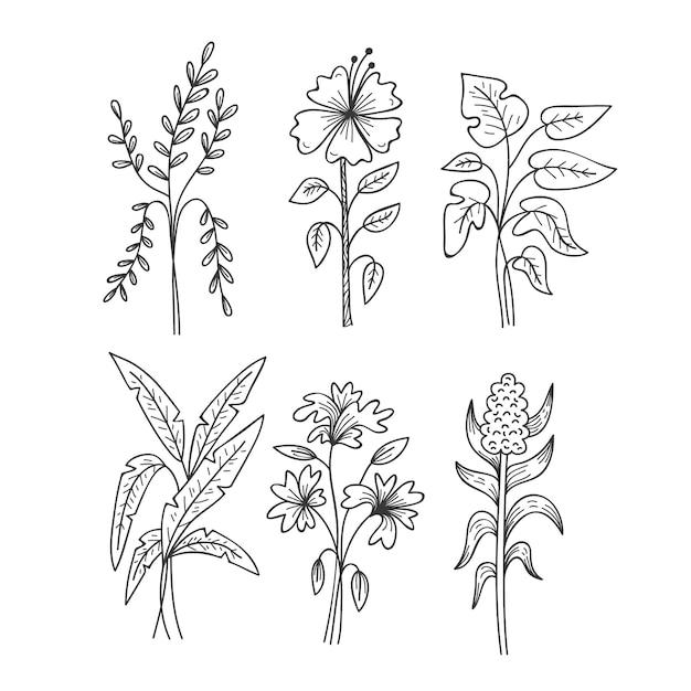 Esboços de folhas tropicais branco e preto Vetor grátis