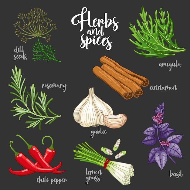 Especiarias e ervas para preparar uma deliciosa comida saudável. ilustração botânica colorida em fundo escuro com sementes de endro, alecrim, pimenta, rúcula, alho, canela, manjericão, capim-limão. Vetor Premium