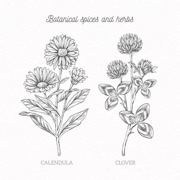 Especiarias handdrawn e ervas Vetor grátis