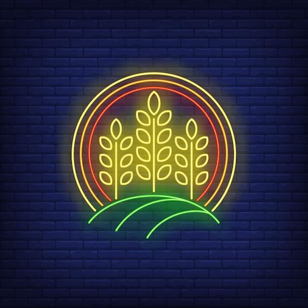 Espigas de trigo em sinal de néon do círculo. Vetor grátis