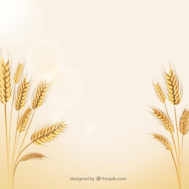 Espigas de trigo natural Vetor grátis