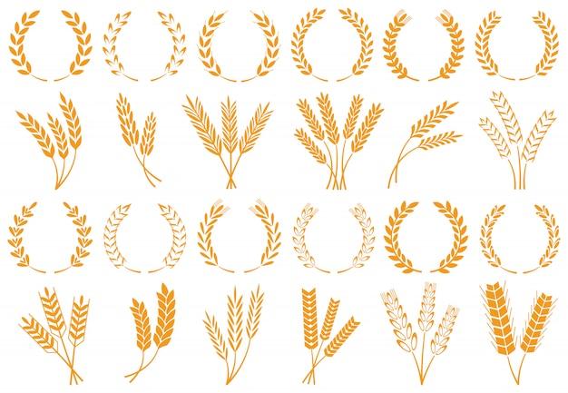 Espigas de trigo ou cevada Vetor Premium