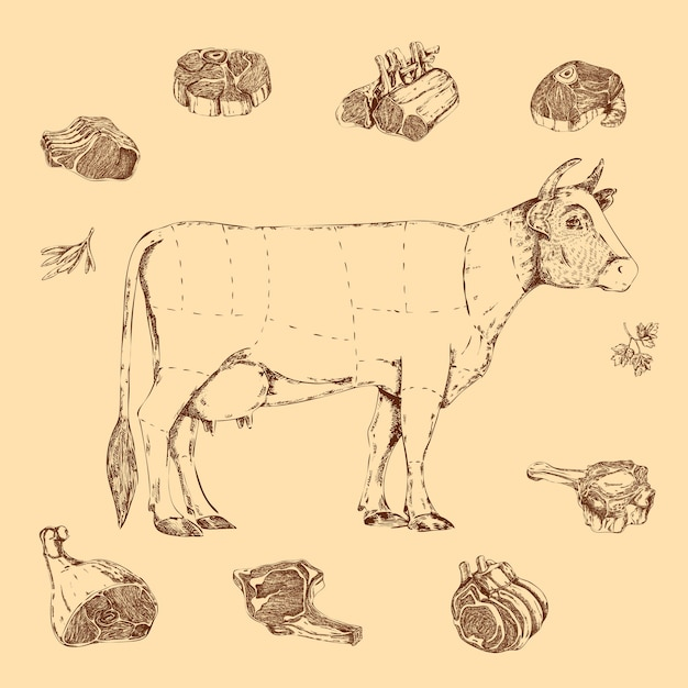 Esquema de carne desenhada à mão de carne bovina com inscrições de vaca e ervas Vetor grátis