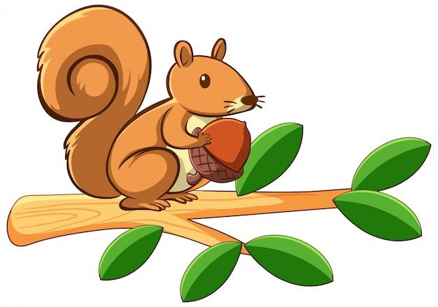 Esquilo em branco Vetor grátis