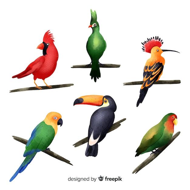 Estilo de aquarela de coleção de aves exóticas Vetor grátis