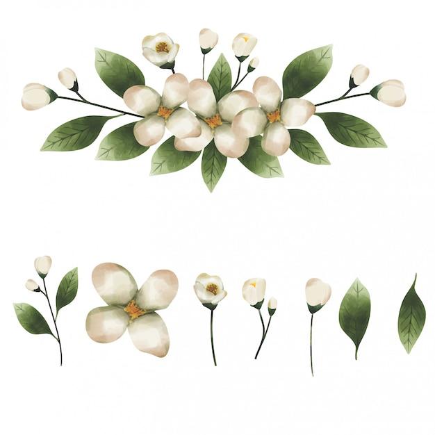Estilo de aquarela de elemento de folha de eucalipto Vetor Premium