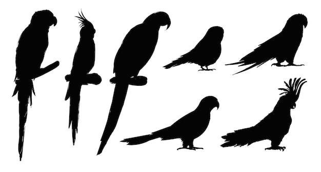 Estilo de desenho de ilustração da coleção de aves papagaio Vetor grátis