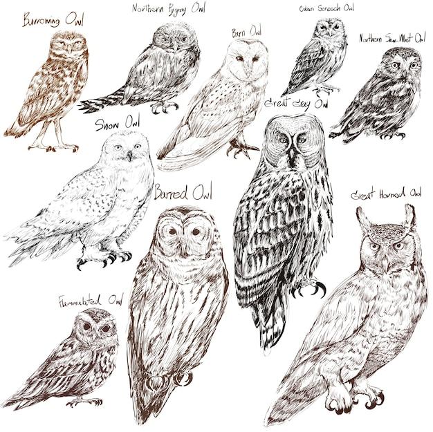 Estilo de desenho de ilustração da coleção de pássaros de coruja Vetor grátis