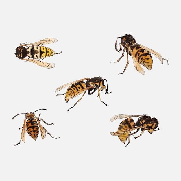 Estudos de vespas por julie de graag Vetor grátis