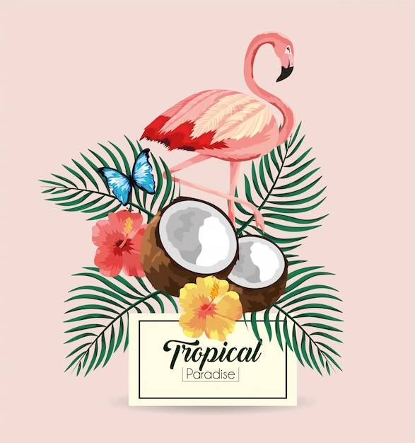 Etiqueta com coco flamengo e tropical com borboleta Vetor Premium